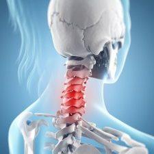 neck skeleton